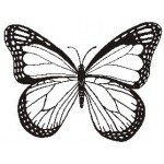 A3094 Butterfly