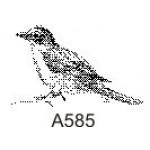 A585 Small Bird