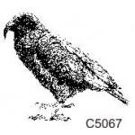 C5067 Kea