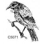 C5071 Tui
