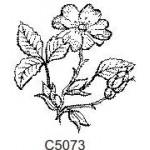 C5073 Flowers
