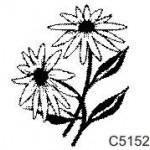 C5152 Daisies