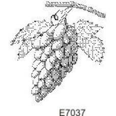 E7037 Grapes