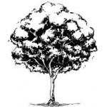 E7169 - Tree