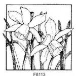 F8113 Daffodils