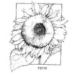 F8116 Sunflower