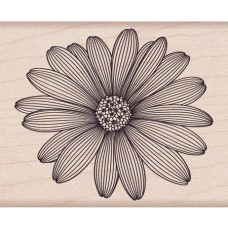 F5741 Etched Daisy